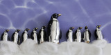 The March of The Penguins - An Almost True Story