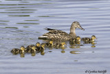 First Ducklings