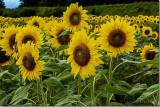 Lois DeEll 2014 Sept London DrugsTheme: Harvest TimeSeeds for Harvest