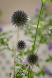 Valerie Payne08 Flower