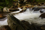 Hunting Creek 2 wk1 IMG_2774.jpg