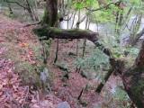 Burpham Dads - Training Walk at Brecon Waterfalls 20 Oct 2013  (86).jpg
