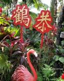 CNY 2014 At Jurong Bird Park