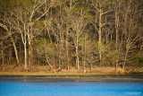 River-Bend-Natchez Trace-Early-Spring-2016