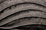 Detail dune feuille