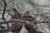 nesting wood thru