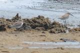 westerns lynn beach