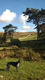 Peggy's Dartmoor Walk