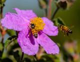 Beesy... beesy