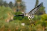 The Heron Airshow
