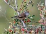 A Warbler in my Yard