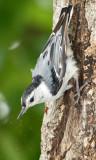 Birds at Black Hill Park