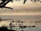 Mist over the Potomac