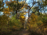 Brilliant yellows of Fall