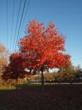 Nov 10th - Parking lot for WMRT at Fort Frederick.jpg