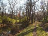 Sunlight hits the green underbrush
