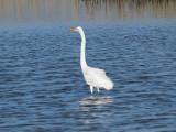 The egret has landed