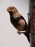 Unidentified bird
