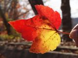Autumn of 2015