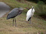 The heron and the stork
