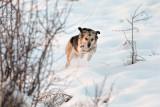 Dog running - Dushanbe