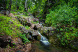 Forest stream - Varzob