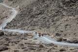 Men and donkeys - Afghanistan