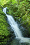Dolgoch Lower Falls