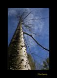 Nature Nice arbre Phoenix IMG_8967.jpg