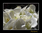 Nature fleur IMG_3576.jpg