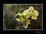 Nature fleur IMG_9290.jpg