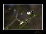 Nature fleur IMG_9354.jpg