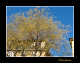 Nature urbain arbre IMG_3584.jpg