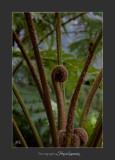 Nice nature Phoenix IMG_8975.jpg