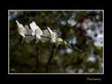Nice nature fleur phoenix IMG_9076.jpg