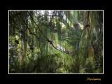 Nice nature phoenix IMG_8969.jpg