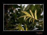 Nice nature phoenix IMG_9074.jpg
