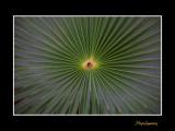 Nice nature phoenix IMG_9087.jpg
