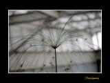 Nice nature phoenix IMG_9124.jpg