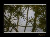 Nice nature phoenix IMG_9130.jpg