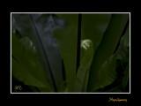 Nice nature phoenix IMG_9131.jpg