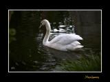Nice nature phoenix animal IMG_9064.jpg