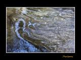 nature eau IMG_8826.jpg