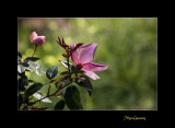 Nature Fleur JB IMG_9853.jpg