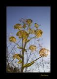 Nature fleur PB IMG_9834.jpg