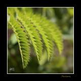 Nature plante PB IMG_9821.jpg