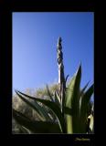 Nature plante PB IMG_9843.jpg