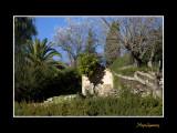 Paysage provence IMG_9180.jpg