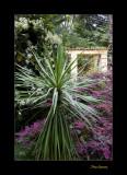 Nature Jardin Menton IMG_9955.jpg