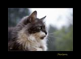 Nature animal chat menton IMG_0077.jpg
